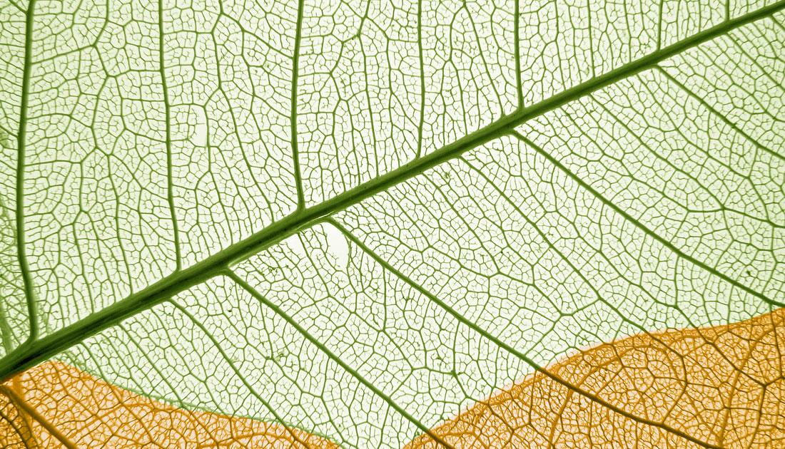 Dieses Foto zeigt herbstliche Blätter